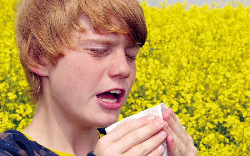 Fahrzeuge, die von Allergikern und Asthmatikern benutzt werden
